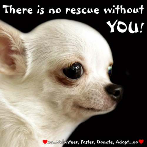 There is no rescue without YOU!